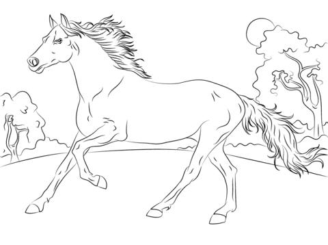 Ausmalbild Laufender Araber Ausmalbilder Kostenlos Zum Ausdrucken Malvorlagen Pferde Malvorlagen Tiere Ausmalen