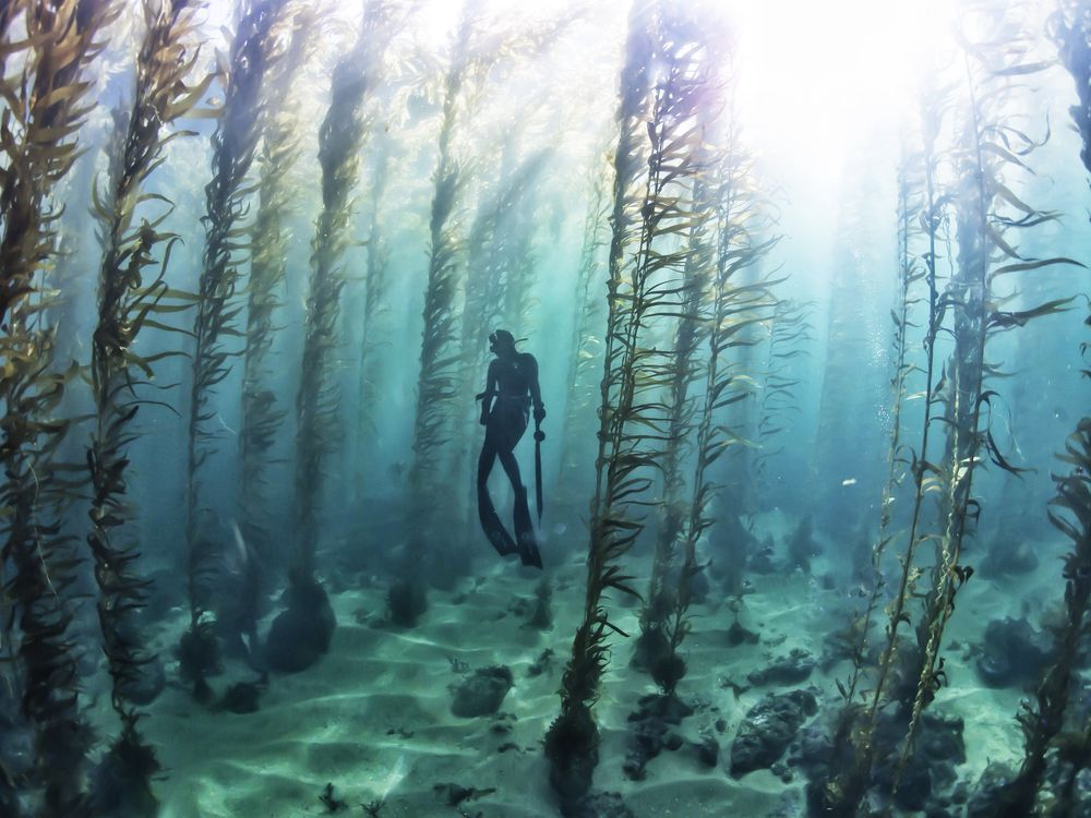 Free diving in a kelp forest kelp forest ocean and scenery for Ocean bed meaning