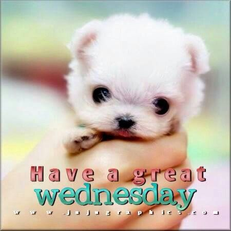Happy Wednesday Cute Little Animals Cute Baby Animals Puppy