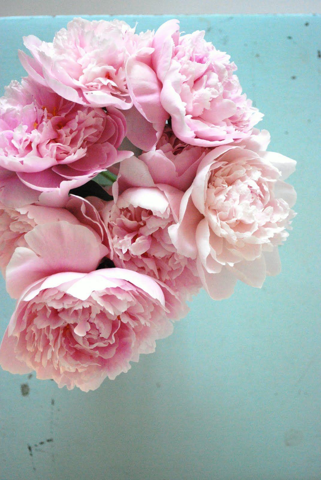 http://juliasvitadrommar.blogspot.com.es/search?updated-max=2010-08-04T19:57:00%2B02:00=7