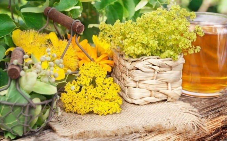 W Czerwcu W Czas Letniego Przesilenia Ziola Maja Najwieksza Moc Herbs Plants Table Decorations