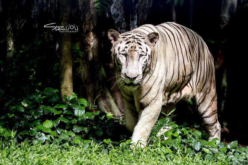 Photo Taken With Canon Eos 6d Animal Youpic White
