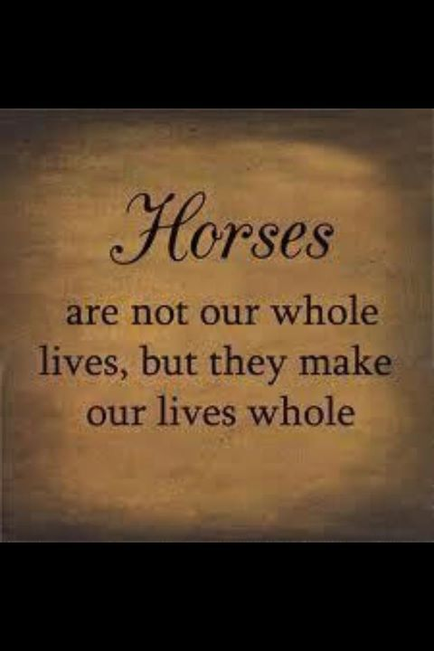 horses make our lives whole- original pinner  please excuse me while i cry and hug smokey