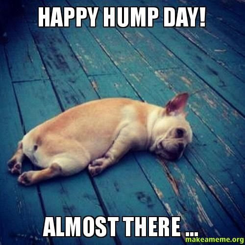 Happy Hump Day Meme Funny : Happy hump day almost there make a meme random