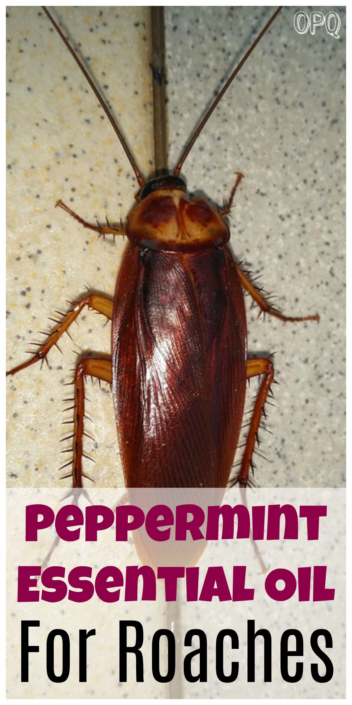 Peppermint Oil For Roaches Oils Essential Oils Roaches Indoor Plants