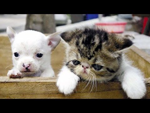 Cat Gives Birth To A Dog Youtube Cats Animals