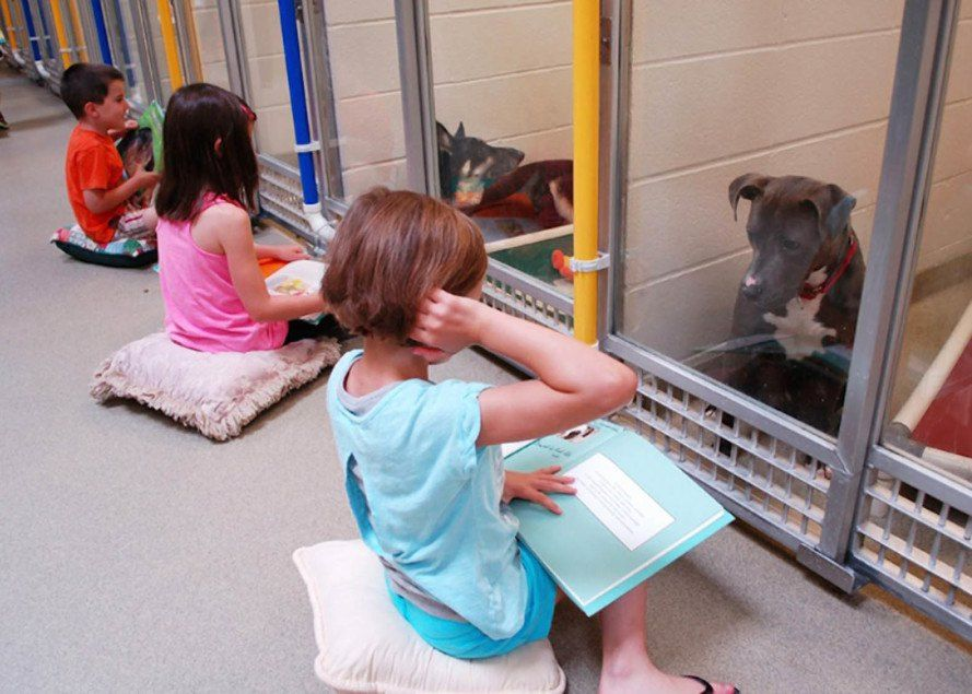 Shelter Buddies Helps Kids Volunteer To Read To Shelter Dogs Shelter Dogs Animal Shelter Kids Reading