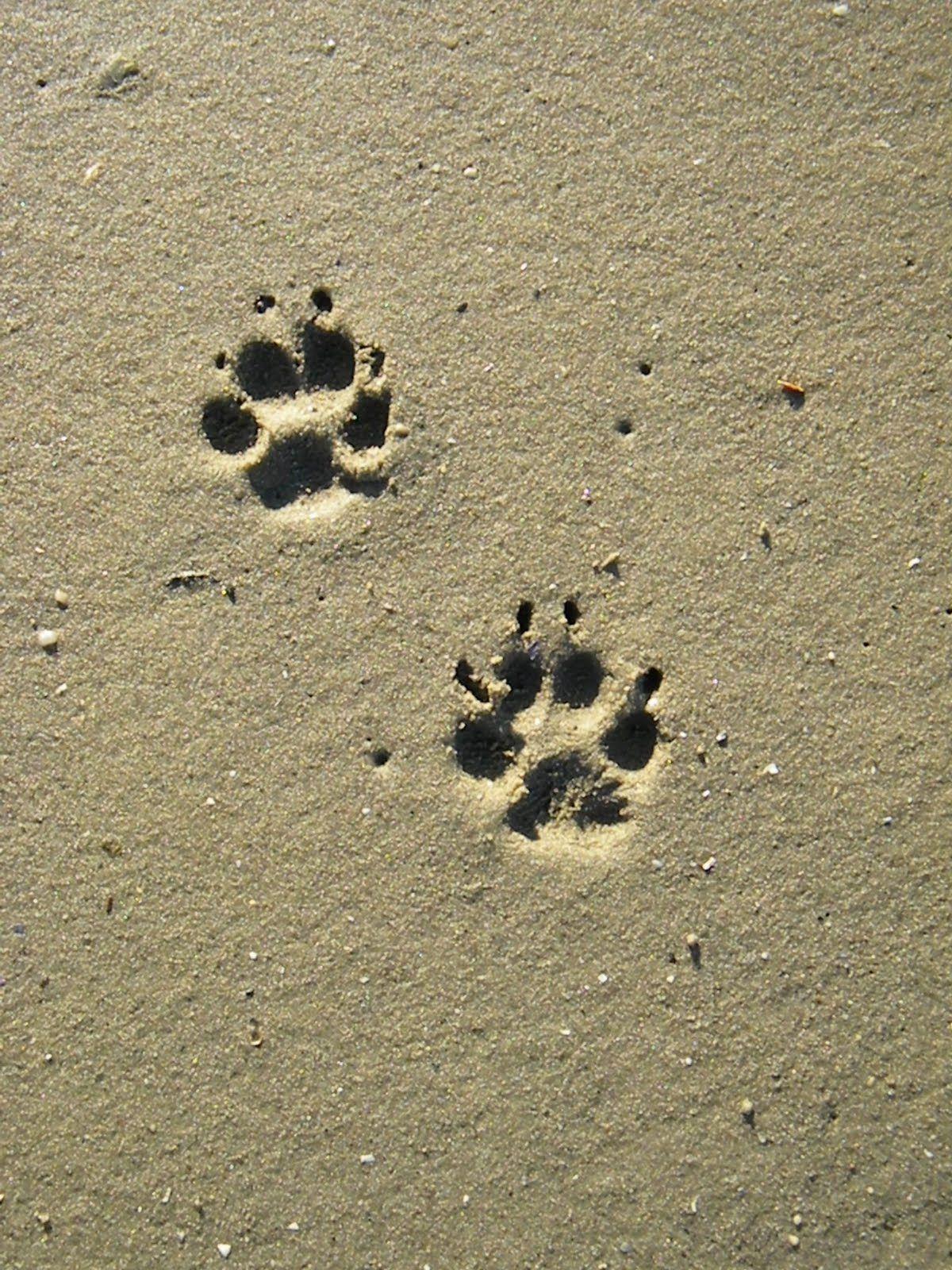 Westie Paw Print Dog Love Pinterest Dog