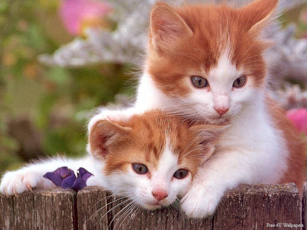 Only One Sentence Can Be Used To Talk About The Love Of These Lovely Kittens They Protect And Protect Each Other Very Cutehttps I Im Cute Cats Cats Kittens