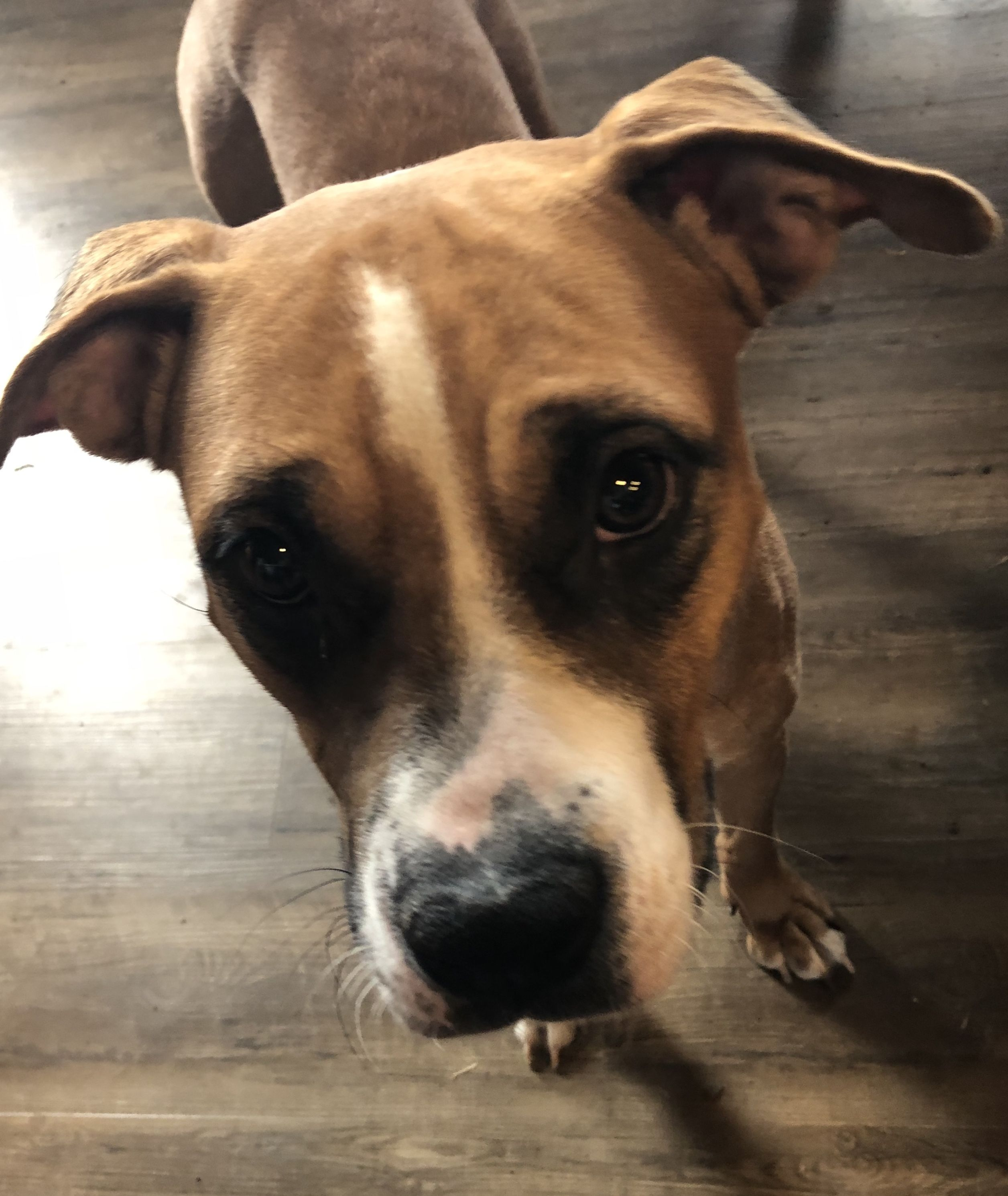 Adopt Dee on Animal rescue, Pets, Dogs