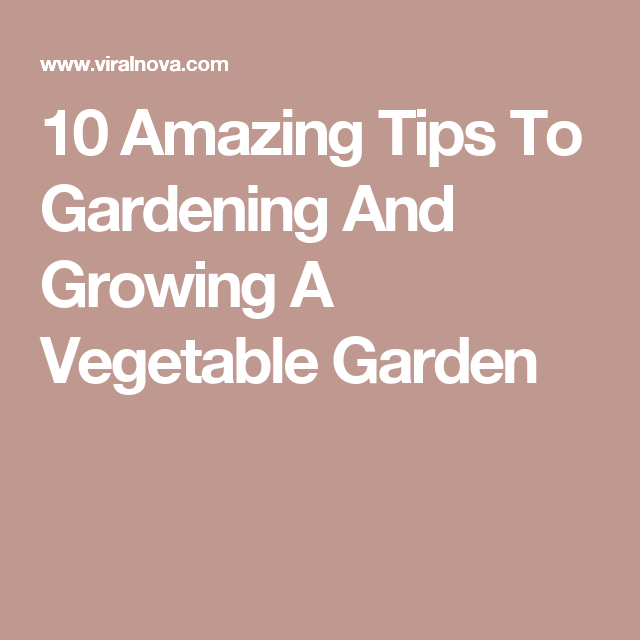 10 Amazing Tips To Gardening And Growing A Vegetable Garden