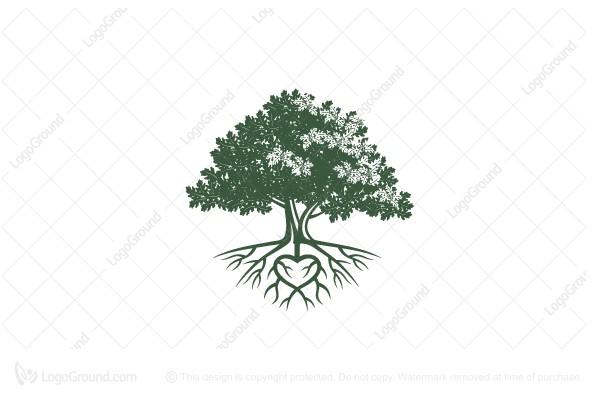 Heart Root Oak Tree Logo Tree Logos Oak Tree Drawings Tree Icon