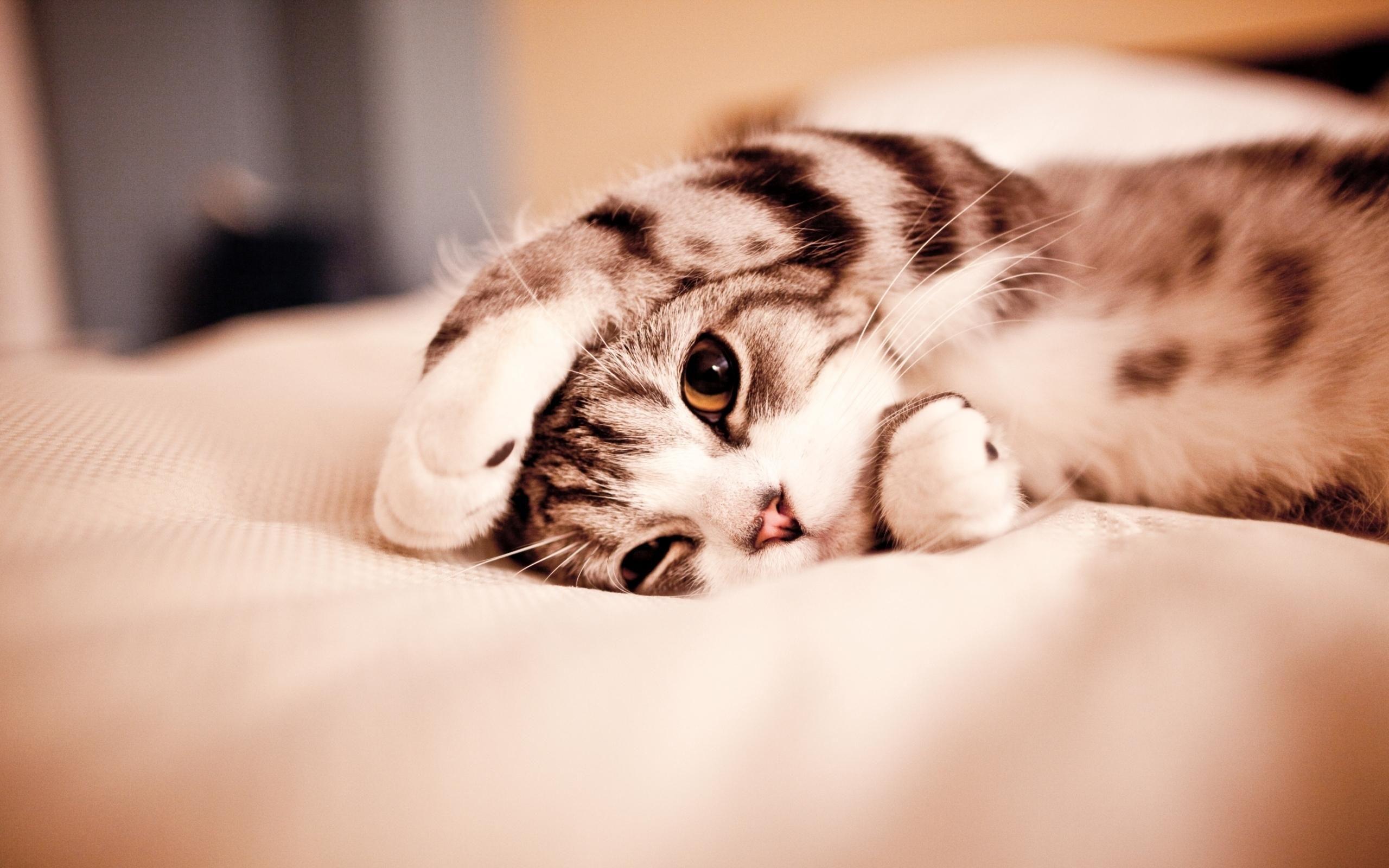Cute Sleepy Kitten Cute Kitten wallpapers animals