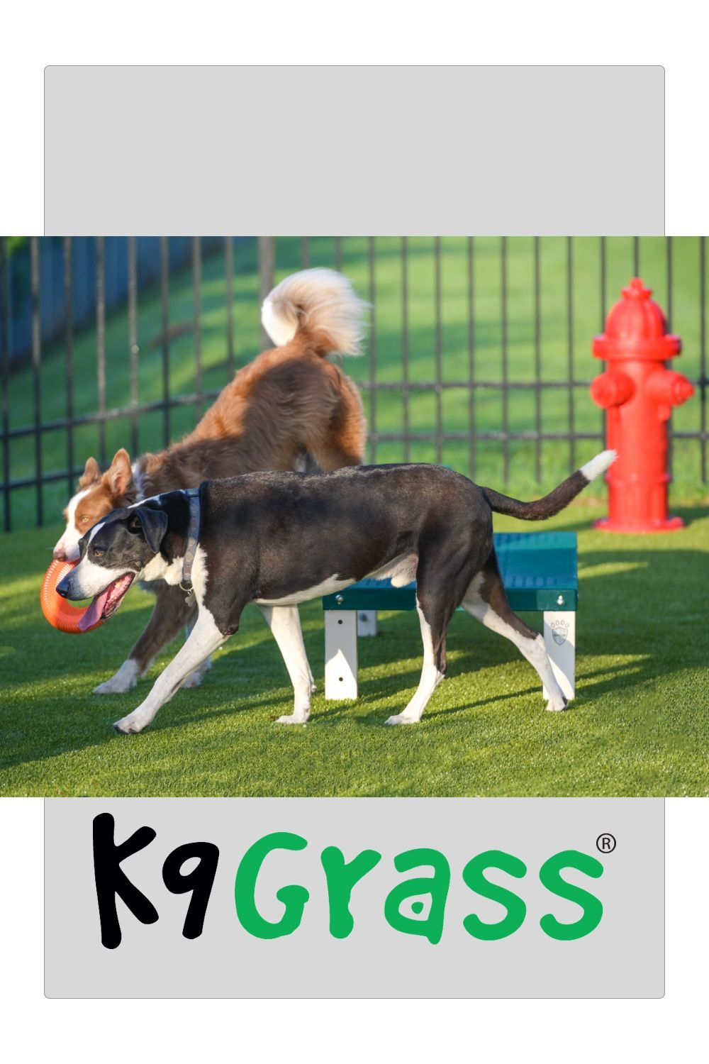 Artificial Grass Designed for Dogs in 2020 Dogs, K9