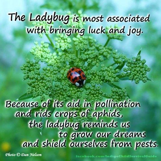 Significance of a ladybug