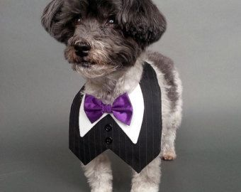 Heather Gray Dog Wedding Tuxedo With Satin or Cotton by WaggleWear