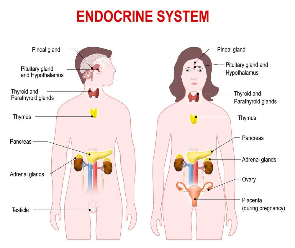The Endocrine System Is Made Up Of Glands That Produce And Secrete A