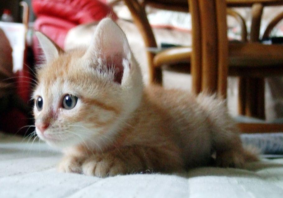 Unduh 89+ Gambar Kucing Kecil Lucu Paling Baru Gratis