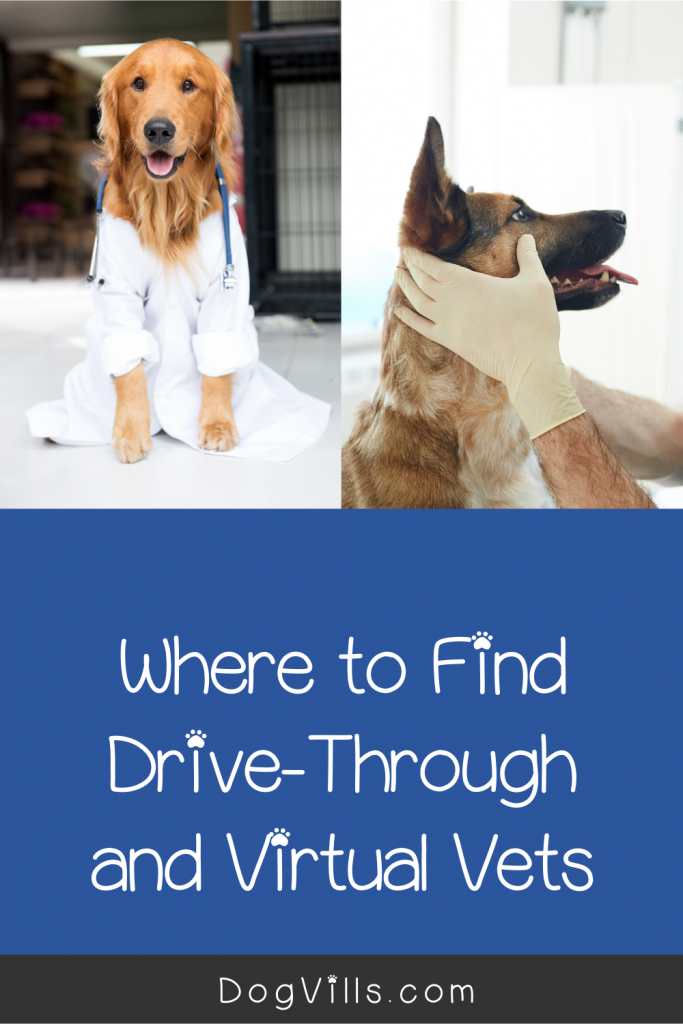 Where To Find Drive Through And Virtual Vets In 2020 Vets Dog