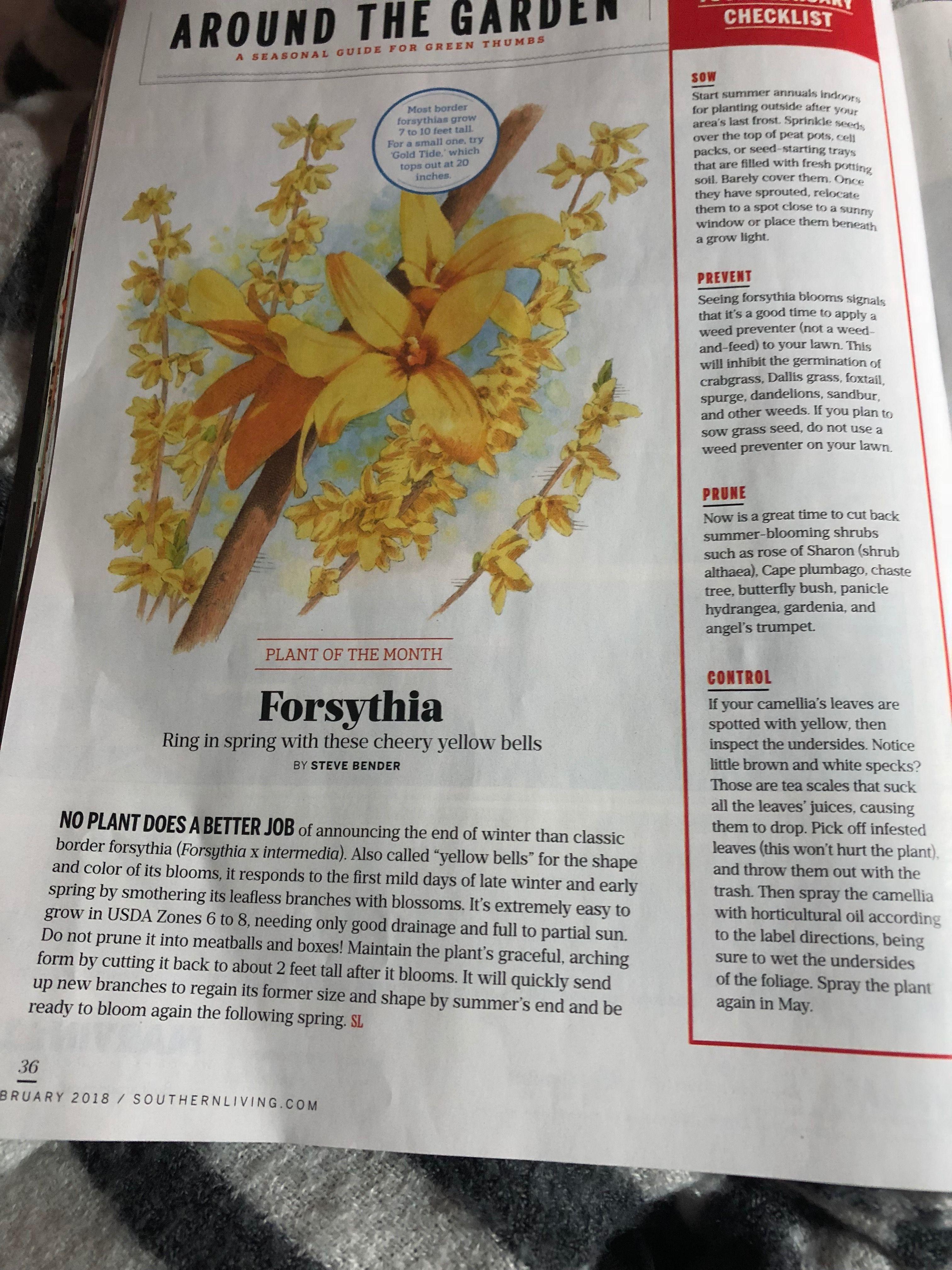 Pin By Michelle Todd On House Garden Landscape Bench Shed Gates Panicle Hydrangea Garden Checklist Angel Trumpet