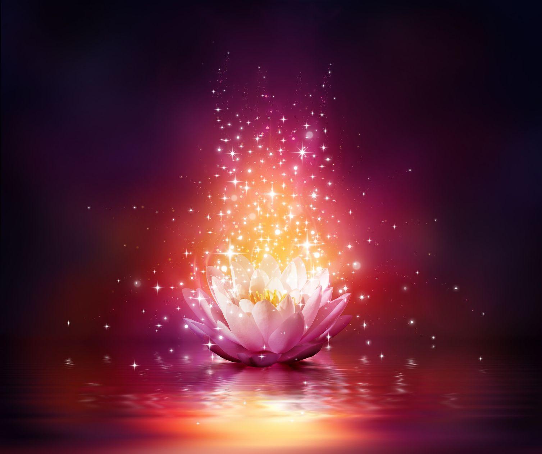 magic flower on water   Spiritual art, Fantasy landscape ...