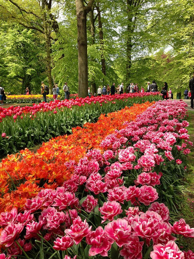 fe255c581651c4bd5c98934426c5406f - How To Get To Keukenhof Gardens