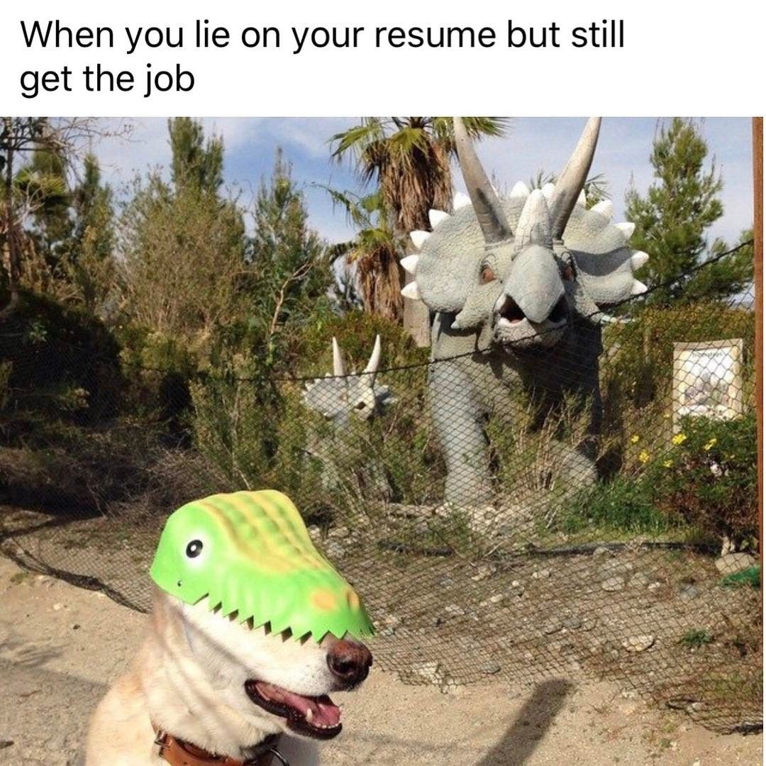 when you lie on your resume but still get the job funny