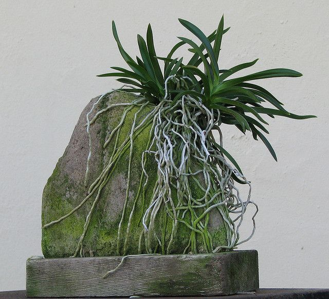 Orchid on mossy rock