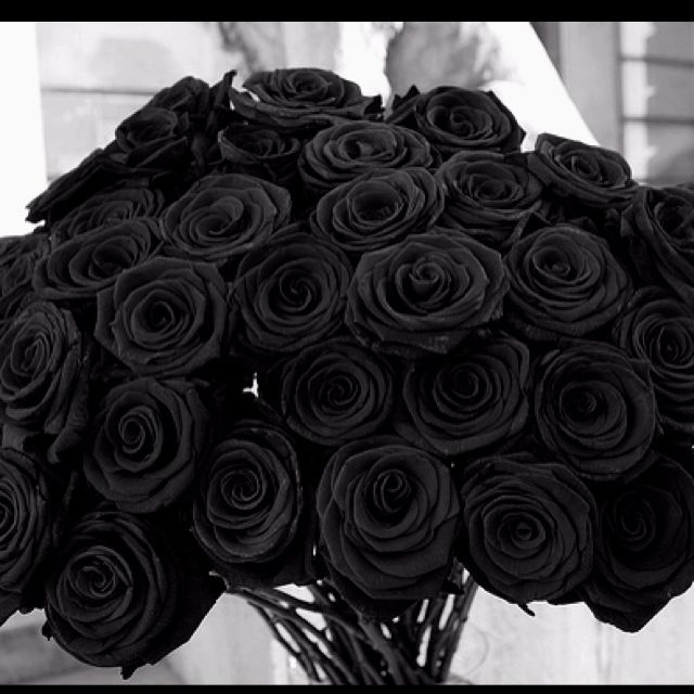 15 Most Beautiful Black Flowers: A Bouquet Of Black Roses Is So Beautiful....where Can I