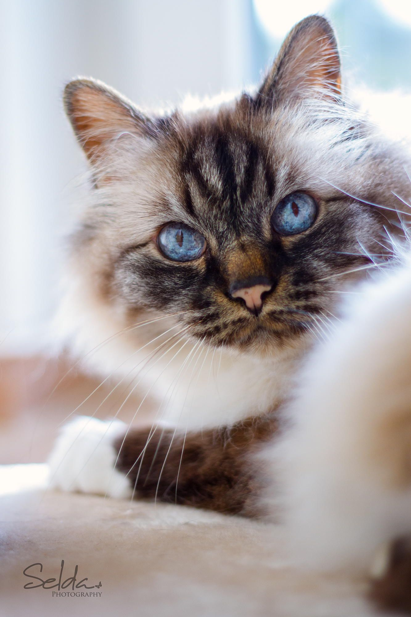 Mr Wonderful By Selda Photography Beautiful Cats Pretty Cats Cool Cats