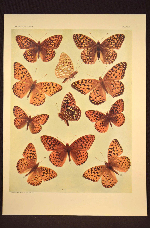 Print Butterflies Wall Art Butterfly Print Wall Decor Antique ...