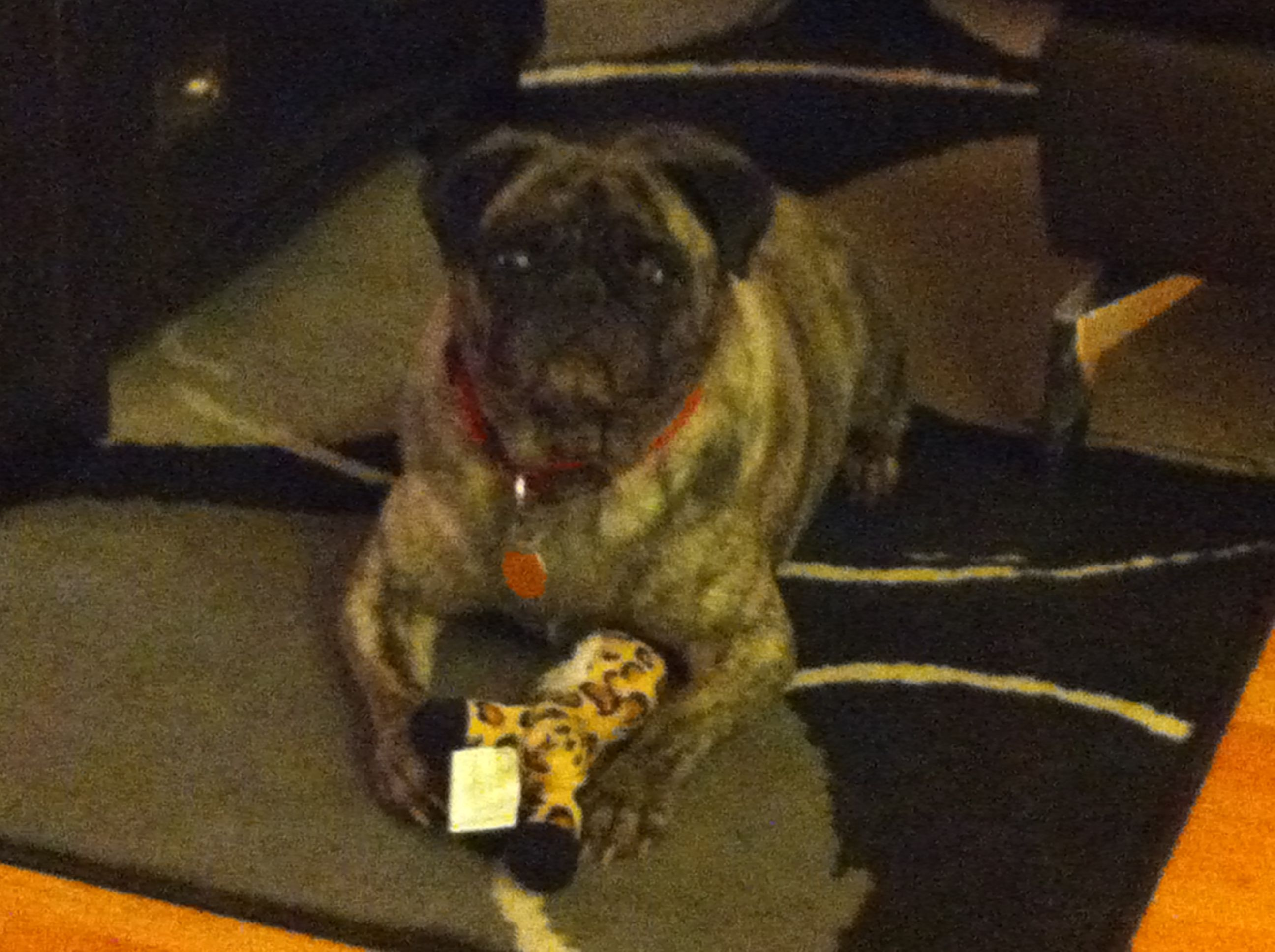 Rosie loves the present her Aunt Whitney sent - she's claimed it and is NOT sharing!