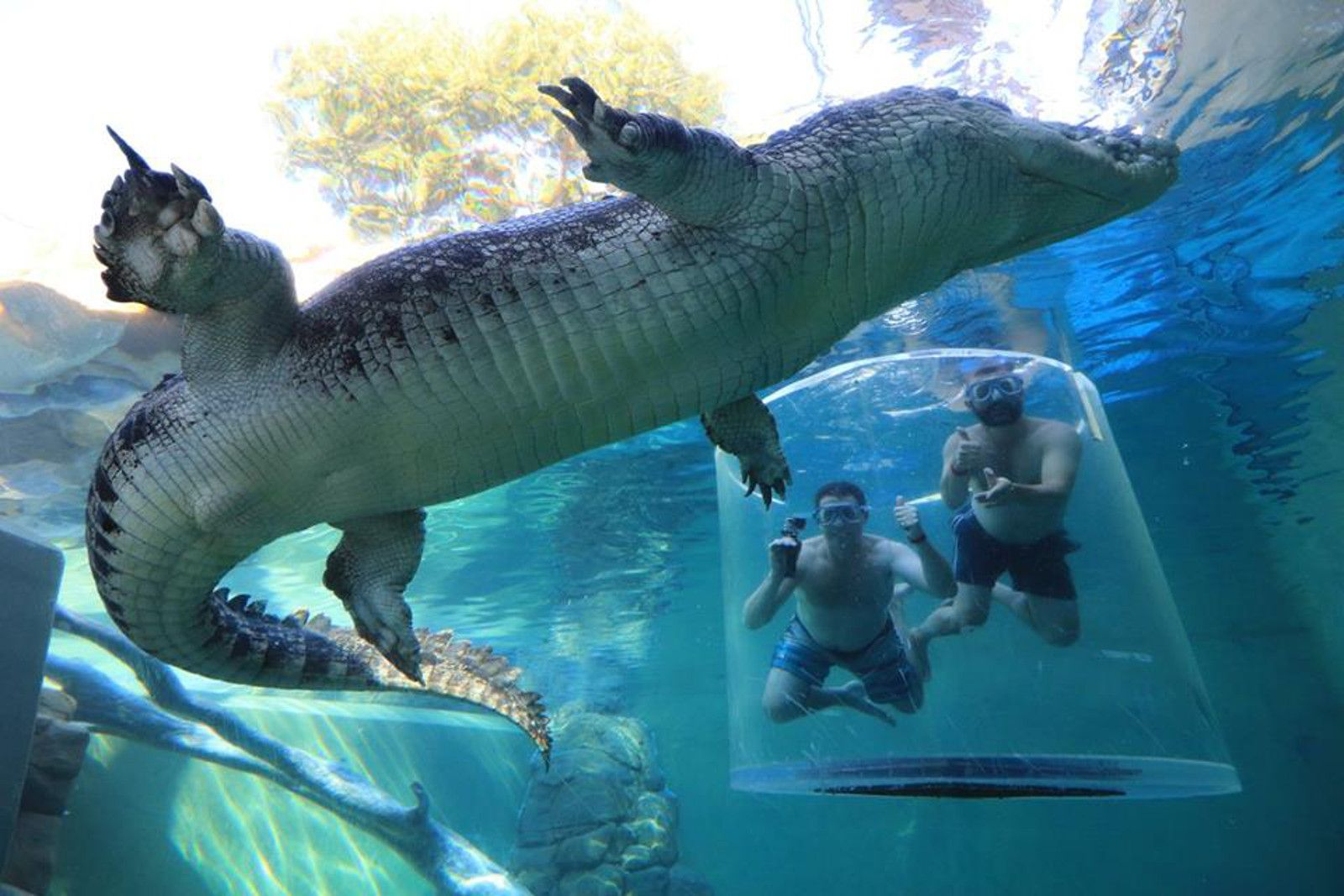People are Paying to Dive With Captive Crocodiles Why