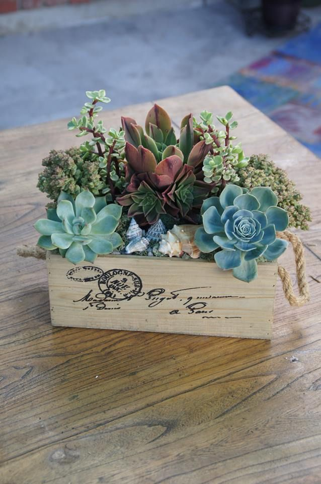 Re-purposed succulent container by Simply Succulent https://www.facebook.com/pages/Simply-Succulent/222665291108990