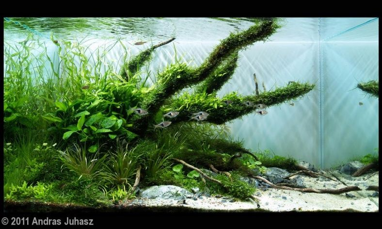 Planted Tank: Jungle Layout Inspiration
