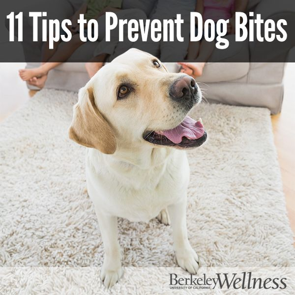 11 Tips To Socialize Your Dog What To Do In Case Of Aggressive