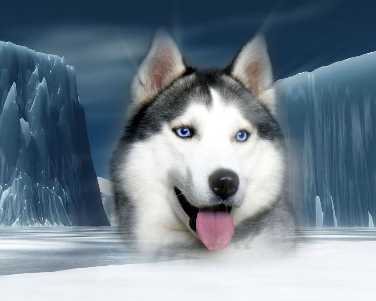 Find Siberian Huskies For Sale In Chicago On Oodle Marketplace