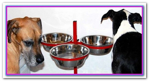 Best Canned Dog Food For Great Danes Some Really Good Canned