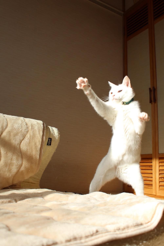 しんばぷー on Twitter Cute cats, Derpy cats, Cat memes
