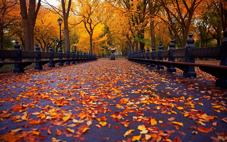 [49+] Central Park Fall Wallpaper on WallpaperSafari  |Autumn Central Park Screensavers