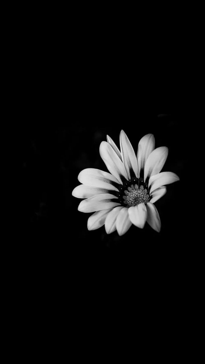 Black And White Black And White Wallpaper Black Background Wallpaper Black And White Flowers