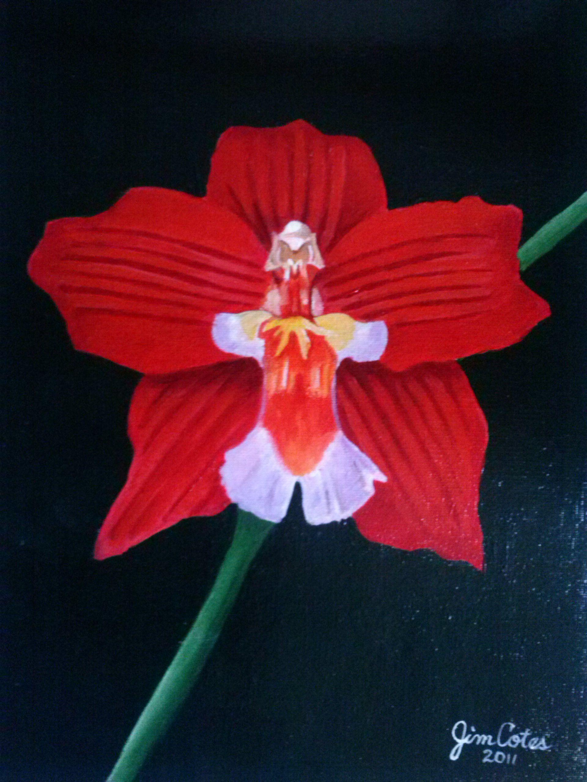 120 Orquideas Acrílico Sobre Lienzo Orquideas Lienzos Espíritu Santo Dibujos