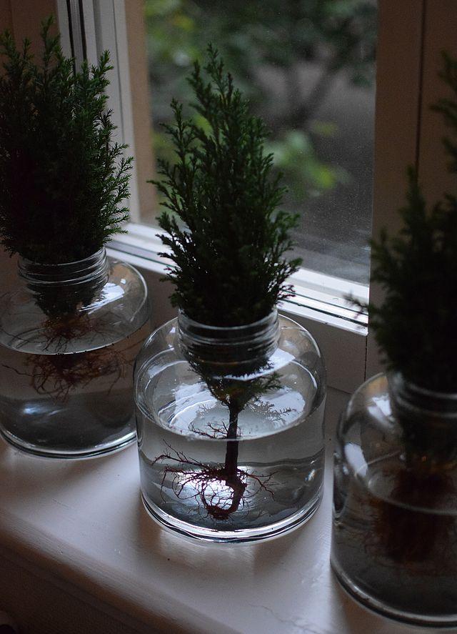 Ellos visade sin jul igår. När det börjar bita lite i luften kan man ju faktiskt tycka att det är helt okej att prata jul fast vi är i september. I en liten lägenhet, en 2.a vid Odenplan var det ett l