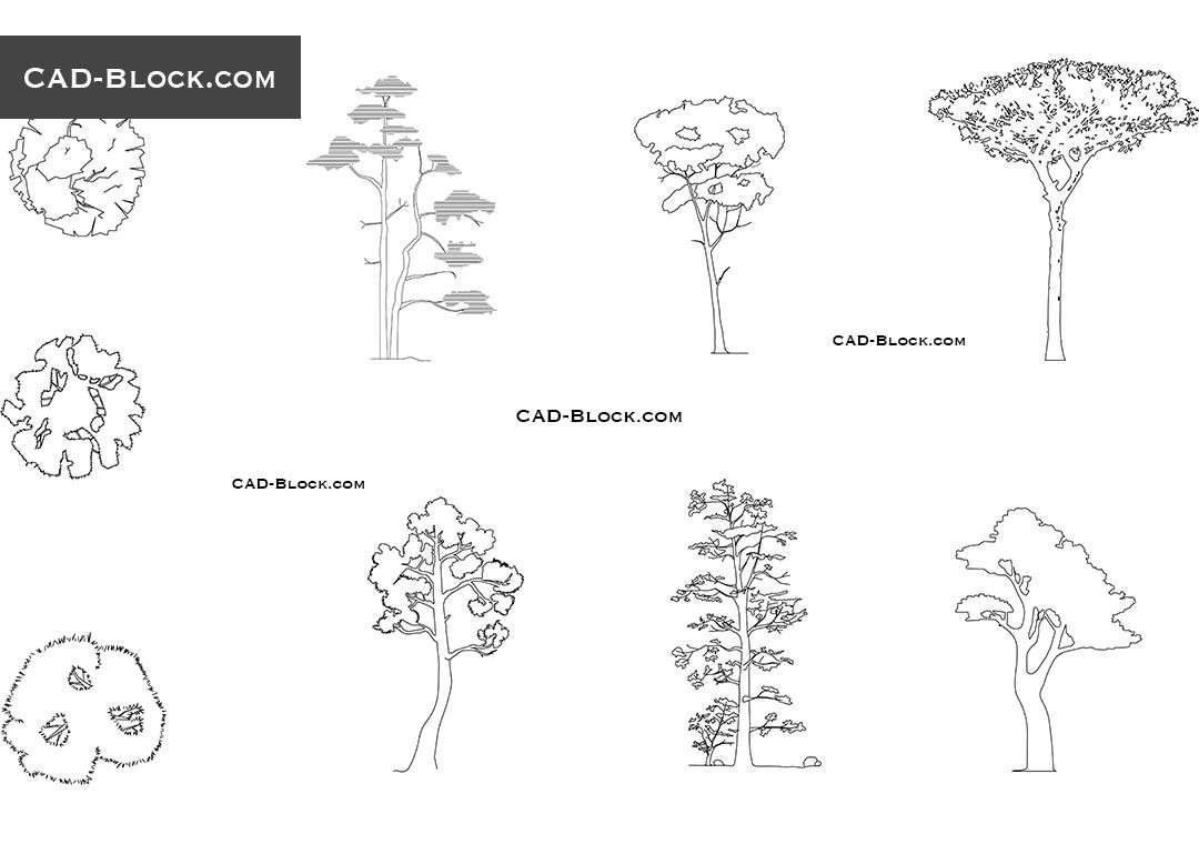 Pine Tree Cad Block Trees Amp Plants Pinterest