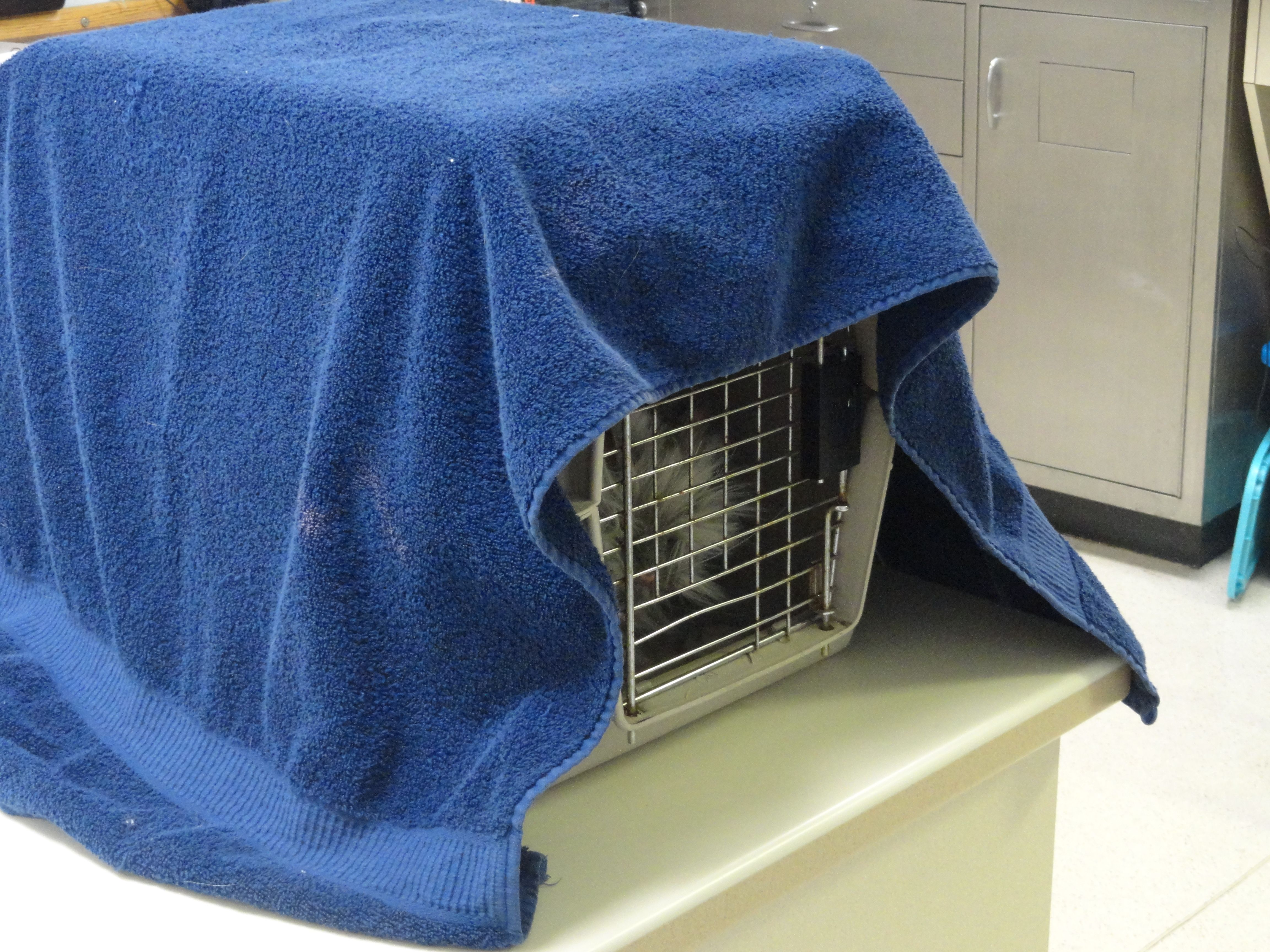 c3b91d58dc We cover all the cat carriers with a towel sprayed with Feliway when they  come in the door.
