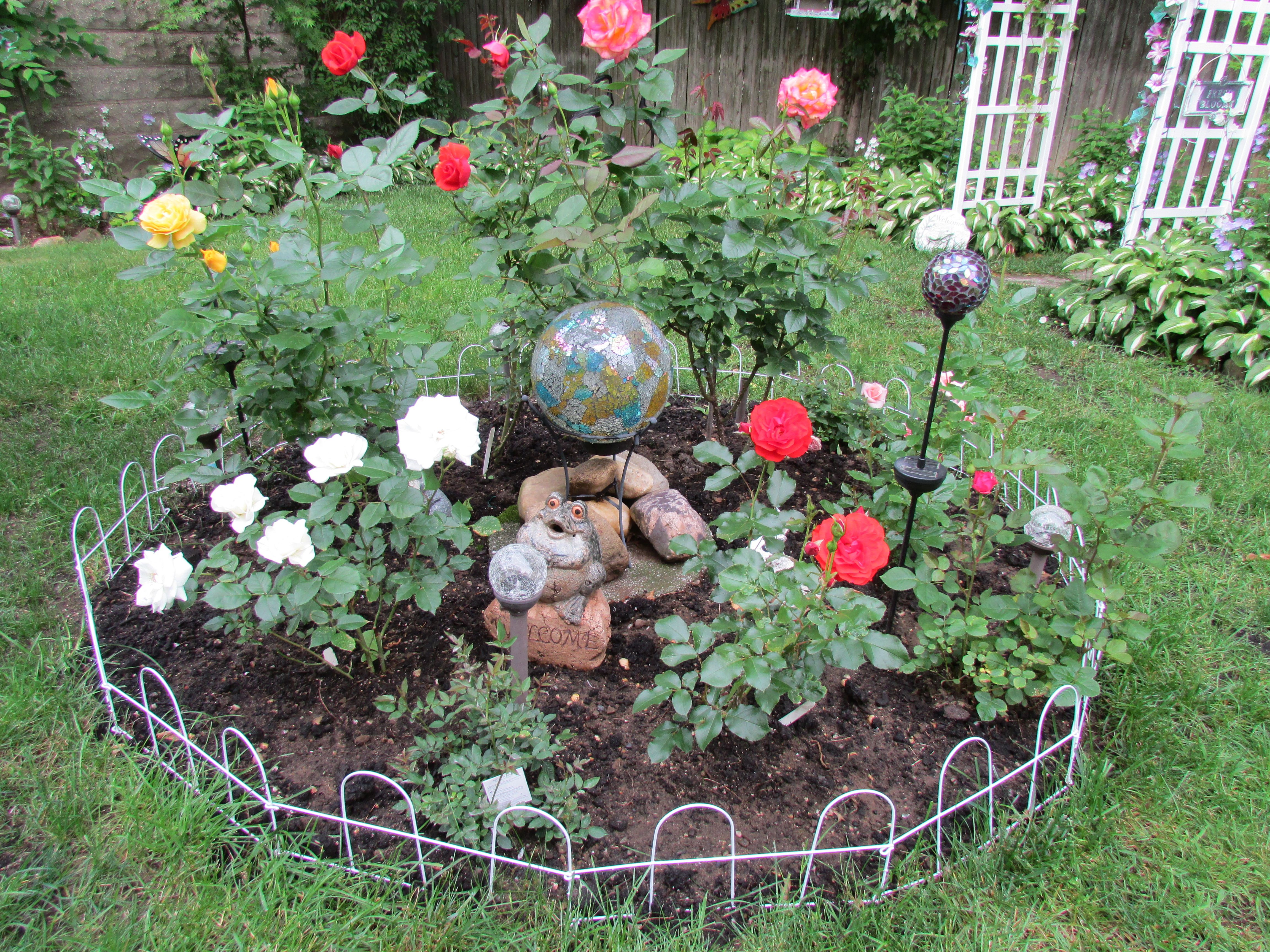 My small rose garden