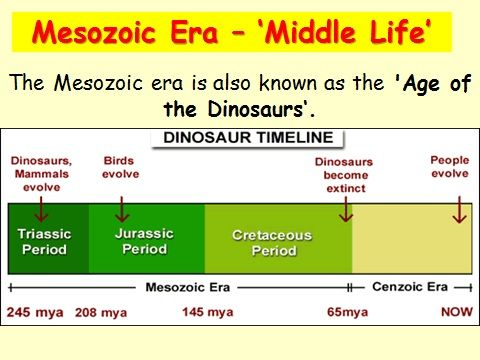 History timeline eras dinosaurs google search kids hs history history timeline eras dinosaurs google search ibookread Download