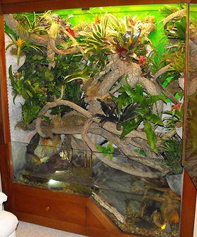 Reptile Cages Custom Reptile Cage Iguana Cage Custom