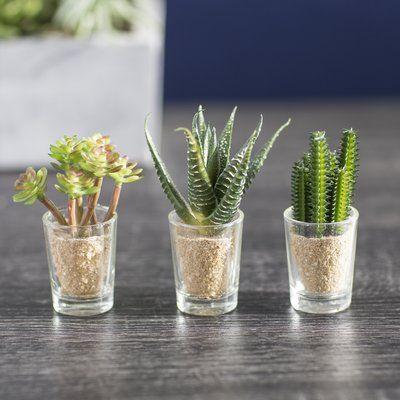 Foundstone Desktop Cactus Plant In Decorative Vase Succulents In Glass Planting Succulents Plants