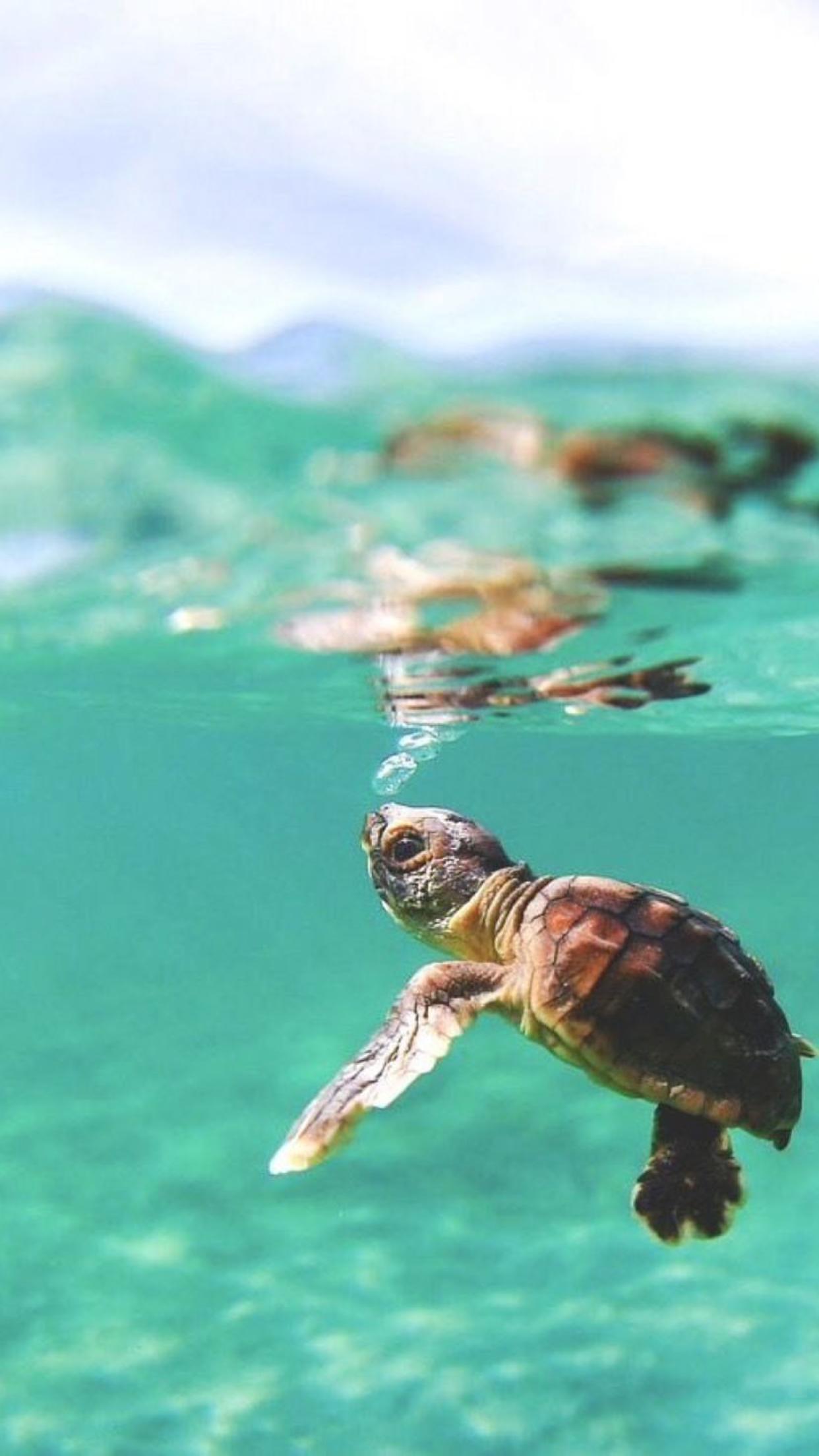 Fondos de tortugas bebes